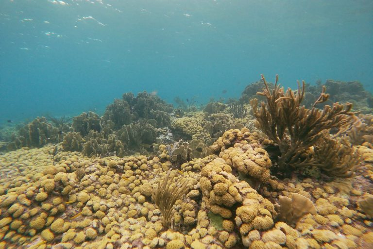 Coral as far as the eye can see at an Aruban coral reef
