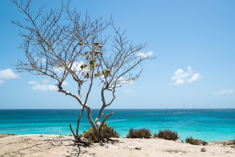 Enjoying the view of the turqoise waters from Aruba's Tres Trapi (Three Steps)