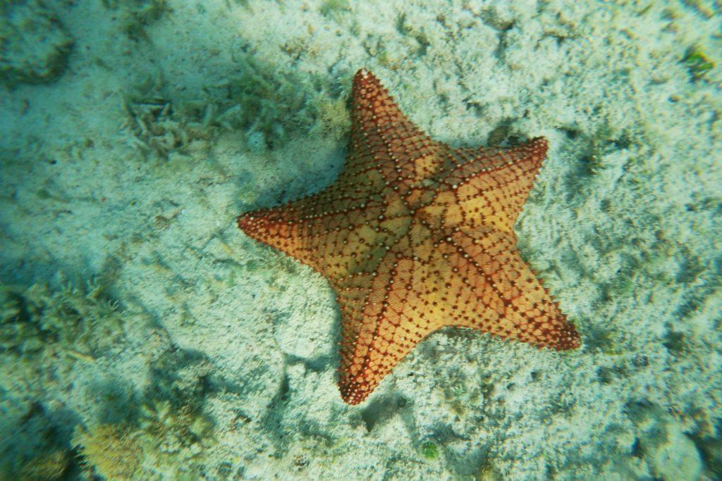 Startfish at Tres Trapi