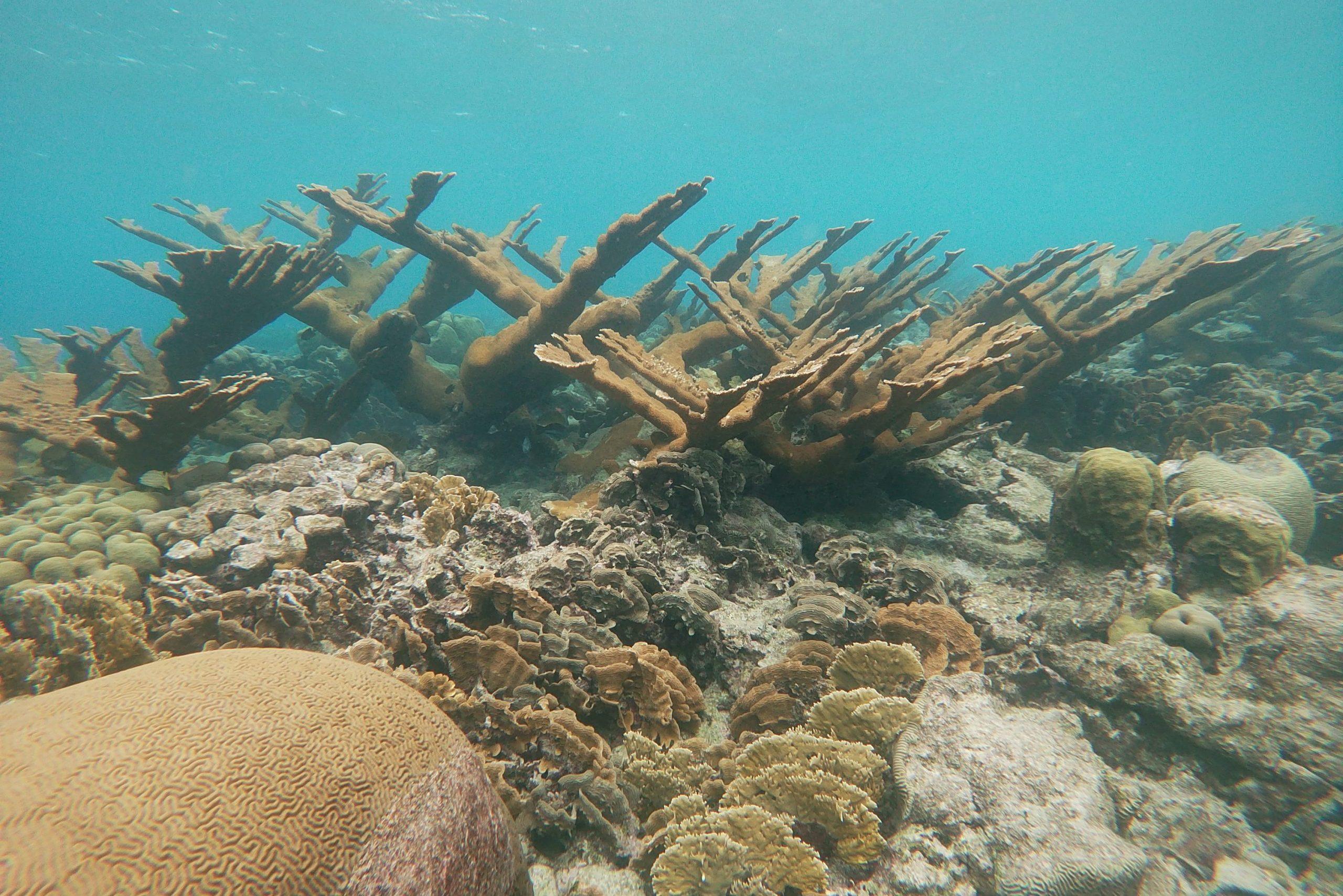 Mangel Halto reef
