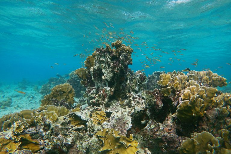 Lots of small reef fish around a coral head in Aruba